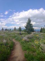 trail running triple tree in Bozeman, Montana